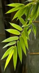 Bamboo Leaves I Tall