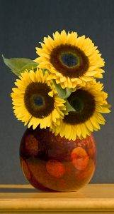 Sunflower in Vase by Jacobson