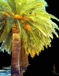 Art Print - Palm Tree