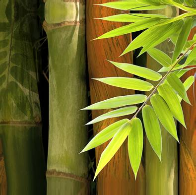 Canvas Art Print - Bamboo
