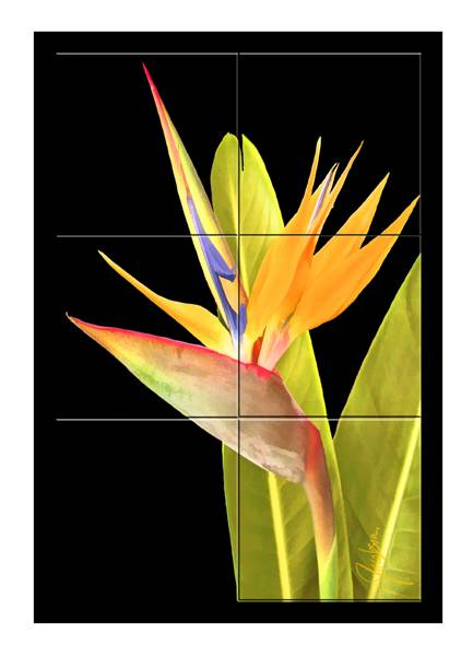 Mural - Tile Art - Bird of Paradise