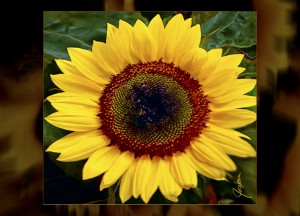 Cutting Board - Serving Tray - Sunflower