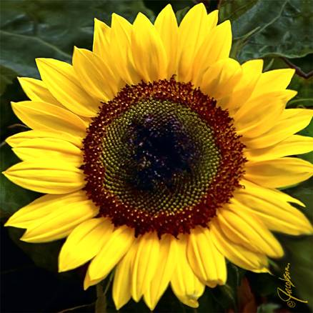 Glass Cutting Board - Serving Tray - Sunflower