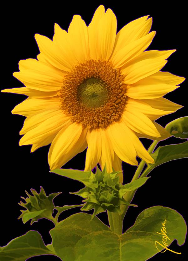 Serving Tray - Sunflower